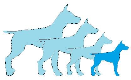 format race chien